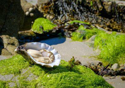 Huître spéciale de Bretagne