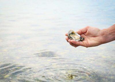huitre kys marine